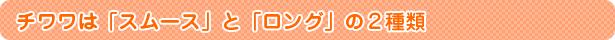 チワワは「スムース」と「ロング」の2種類